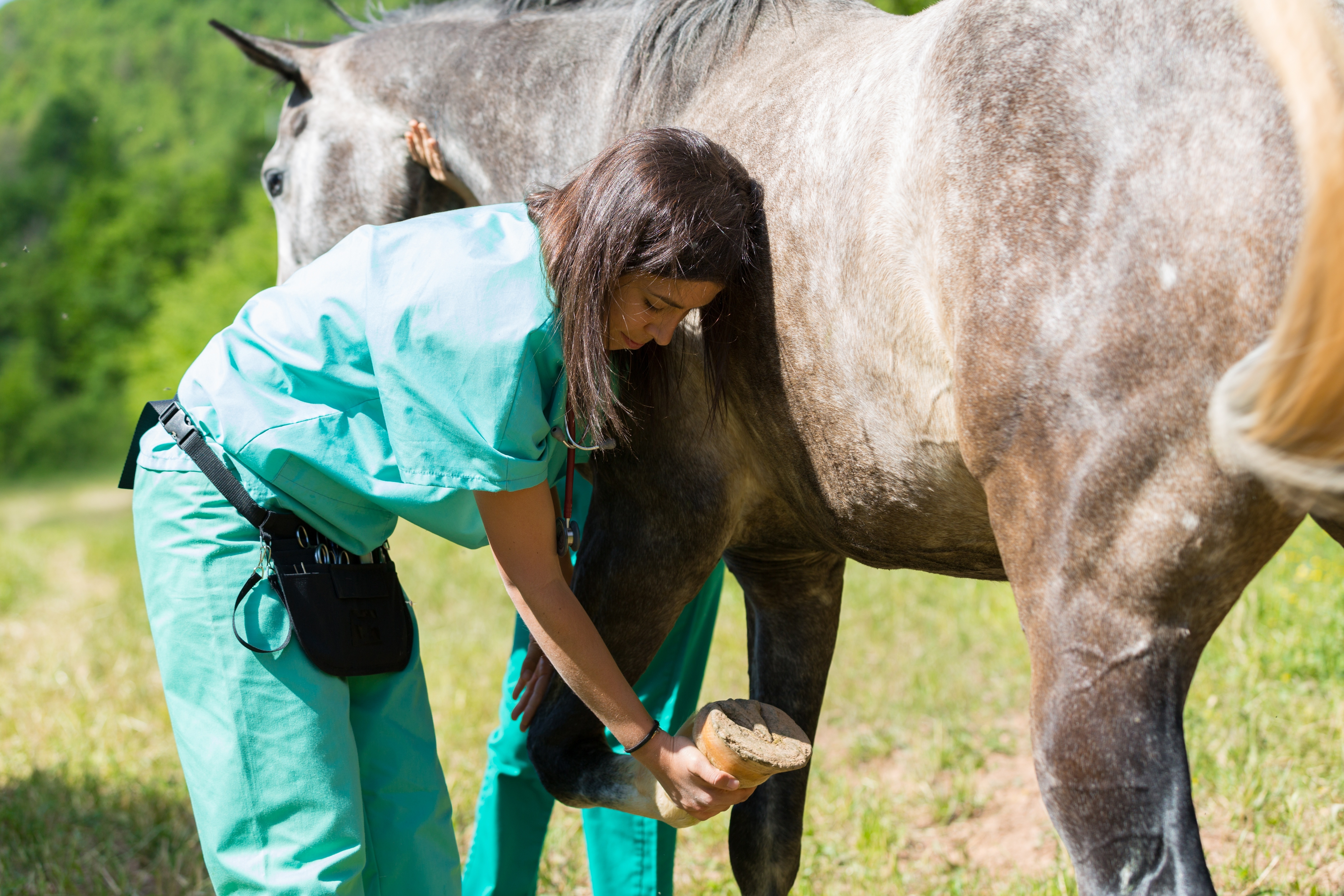 Tuskegee Pre-Veterinary Science program