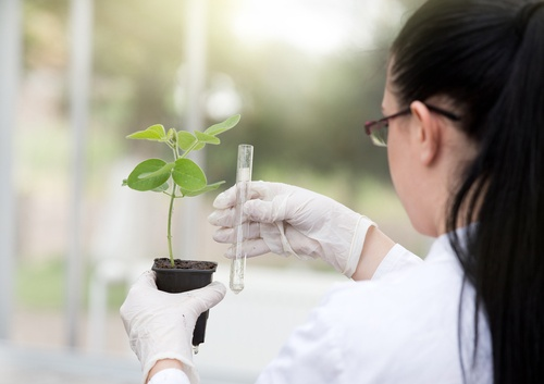 MASTER'S of SCIENCE in PLANT and SOIL SCIENCE
